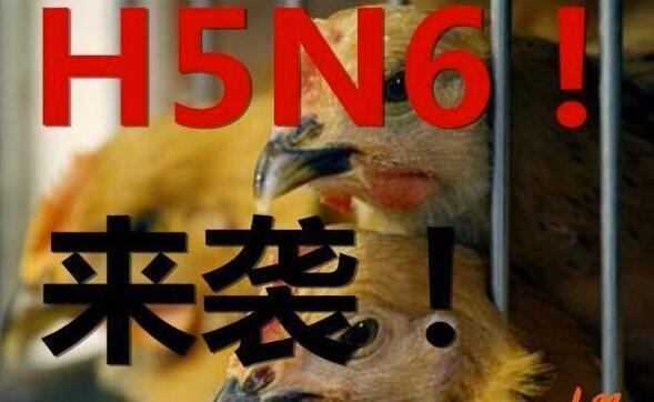 中国向WHO报告21起禽流感传人案例&Facebook投资数十亿美元发展元宇宙 1